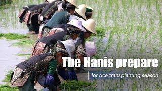 "Live: The Hanis get ready for rice transplanting 云南哈尼族人载歌载舞喜迎""开秧门"""
