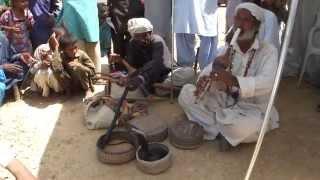 蛇使い:Snake Charmer:سپیرا (saperaa) in Sindh, Pakistan