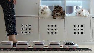 고양이 간식 기차가 도착했어요!