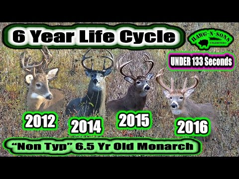 Deer Hunting 2016: 6 BIG BUCK Life Years In UNDER 133 Seconds Video of Whitetail