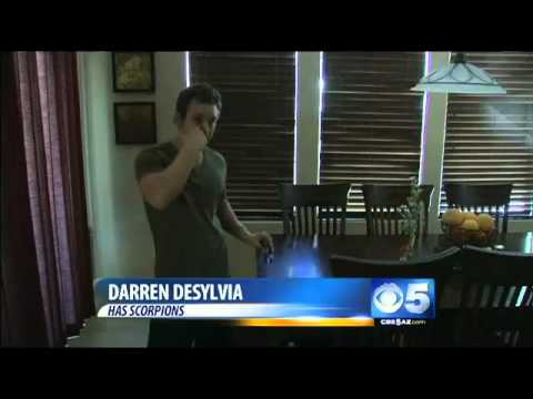Scorpions pop up earlier in Phoenix homes
