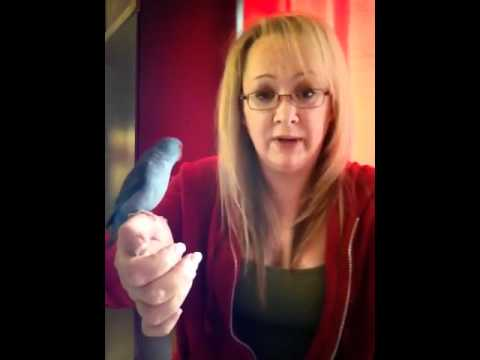 Parrotlet Trick, teach parrot to turn around on your finger!