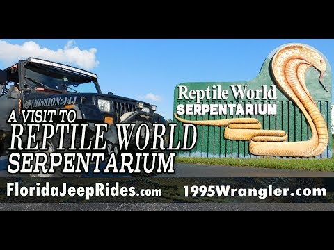 How to milk a snake!  Reptile World Serpentarium Snakes, Snakes, and more Snakes!