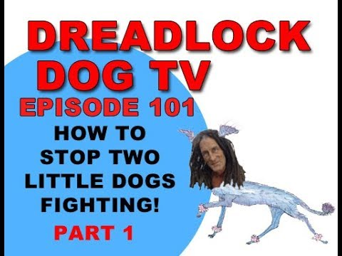 Episode 101   How to stop two little dogs fighting!