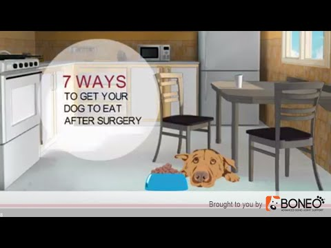 Dog Surgery Recovery- 7 Ways to Get a Dog to Eat