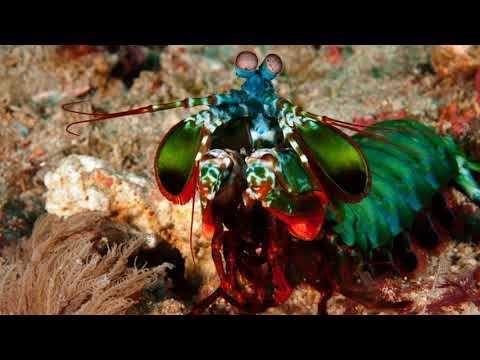 Top 15 Interesting Facts About Mantis Shrimp