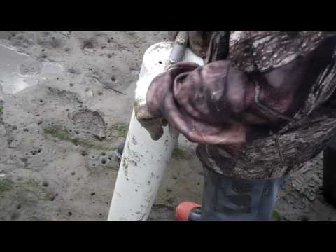 Digging Softshell Clams with a Clam Gun From Siletz Bay