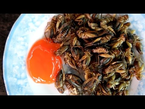 Is cricket the new white meat? BYU food scientist studies edible insects