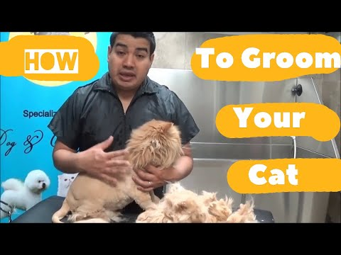 How to groom my Persian and or Long Hair Cat