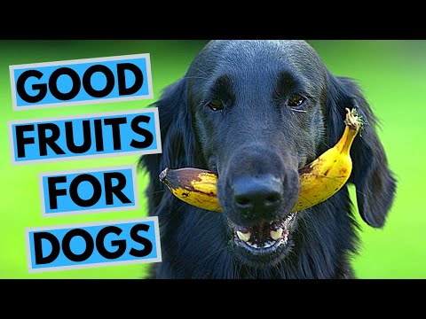 Top 10 Best Fruits for Dogs
