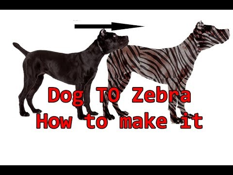 how to make zebra skin from a dog body