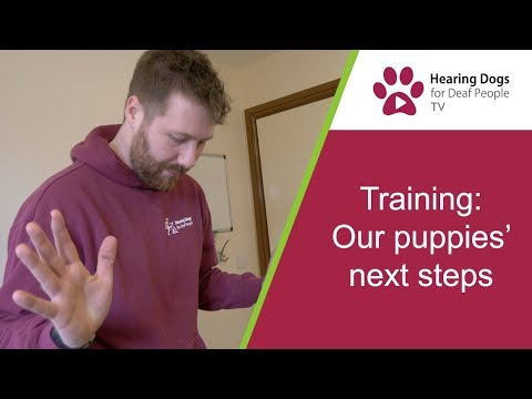 Hearing Dogs TV S2 E4:  Our puppies' next training steps