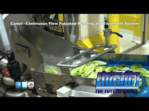 Continuous flow Patented Washing and Treatment system Mod. Camel [Whole Romaine]  by Turatti