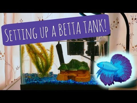 BETTA FISH TANK | How to Set Up a Betta Aquarium
