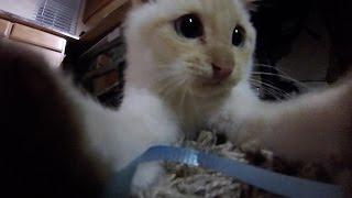 Frozen Kitten Comes Home