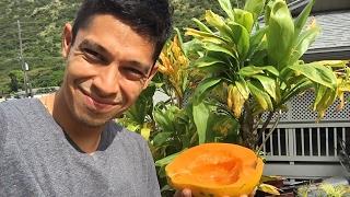 Eating a papaya at home in Hawaii