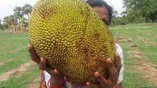 Preparing Sweety JackFruit Payasam in My Village - Food Money Food