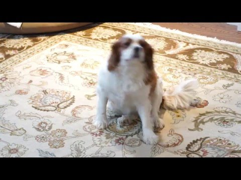 Customer review Oriental Rug Cleaning