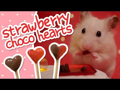 💘 Strawberry Choco Hearts | HAMSTER KITCHEN 💘