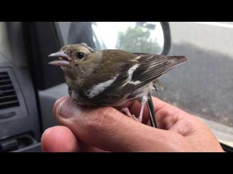 Saving a birds life