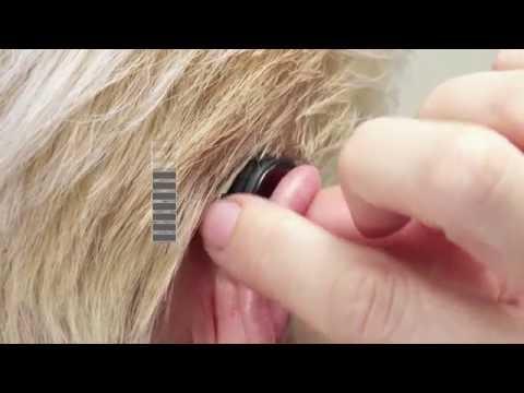 Easily adjust volume on your nessa smart hearing aid