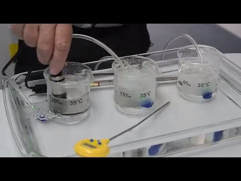 The Effects of Salinity and Temperature on Dissolved Oxygen