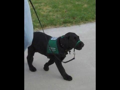 Walking Puppy Nadira