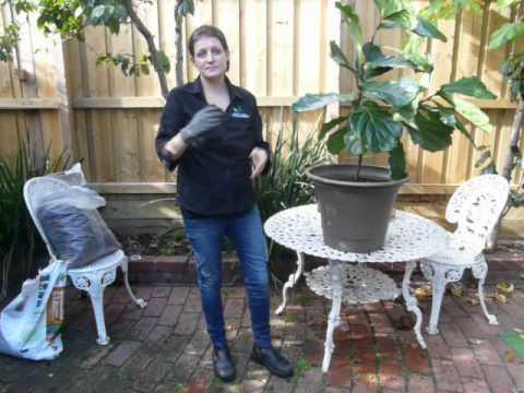 1  Indoor Plant Pests. Gnats Whiteflies