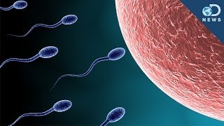 The Sperm Struggle is Real