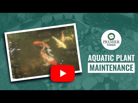 Pond Cleaning and Plant Maintenance