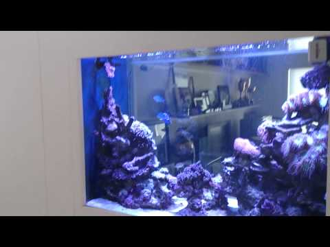 Tips for a reef aquarium in the wall
