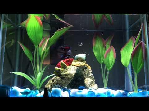 Cleaning My Betta Fish Tank