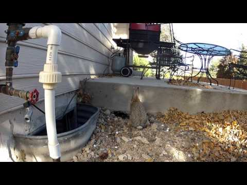 2015 11 03 What's Digging under my Porch?