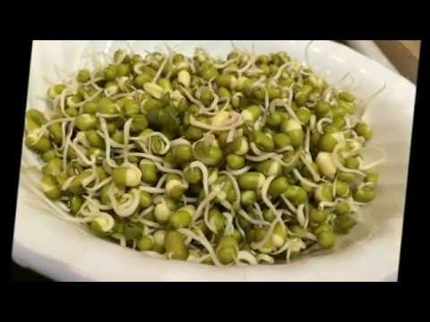How to sprout Green Beans/Moong