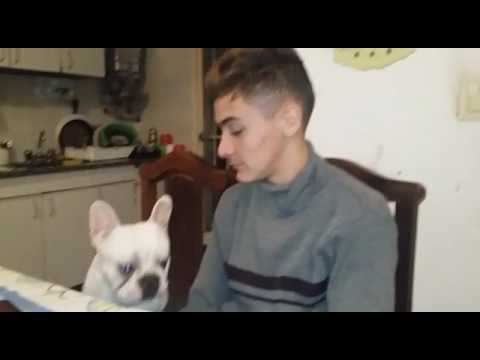 Dog reacts to owner crying