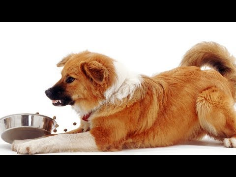 How To Stop A Dog From Guarding Food. Guide To Food Aggression And Resource Guarding.