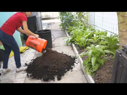 How to make potting mix for seed starting (自制育苗土)