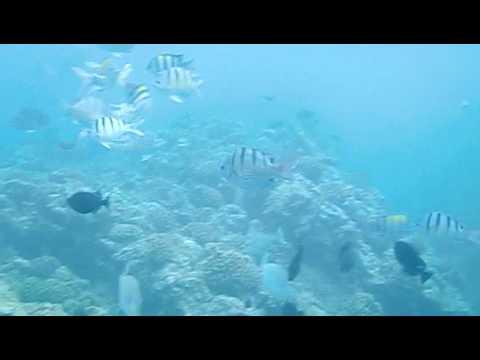 Casio EX-G1 Underwater