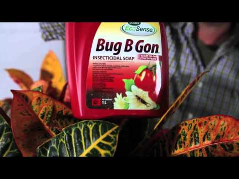 HDFR 6 When should you move your outdoor plants indoors