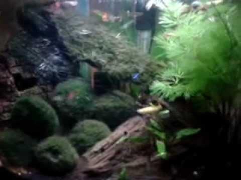AquaOne UFO350 Nano Planted Aquarium Fish Tank March 2013