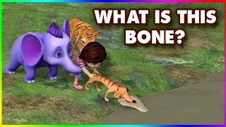 What Is This Bone? (4K)