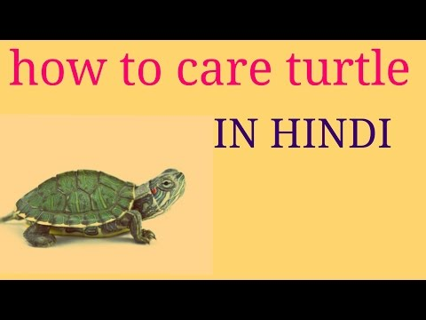 HOW TO CARE TURTLE....IN HINDI