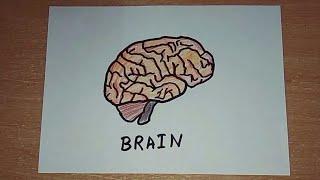 How To Draw A Brain Tube10x Net