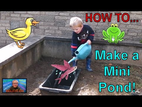 How to Make a Mini Pond | Kids Educational Videos