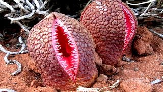 FRIGHTENING Plants You Should Absolutely Be Afraid of!