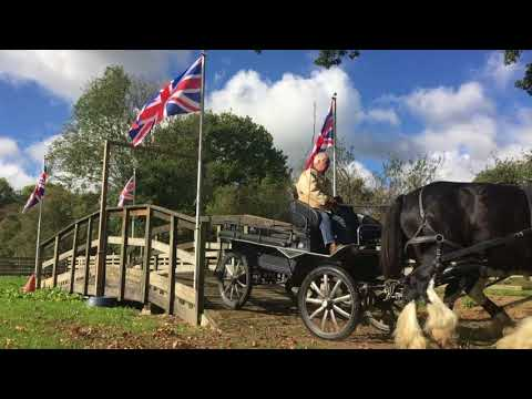 Training a pair of shire horses for a brewery - Barry Hook,