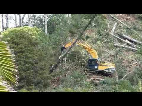 forest machines grappling assisted tree felling. New Zealand part 2