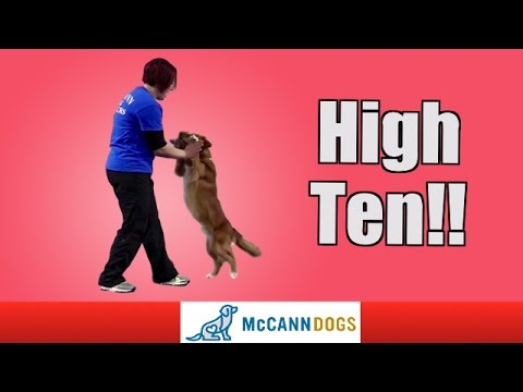Teach Your Dog To