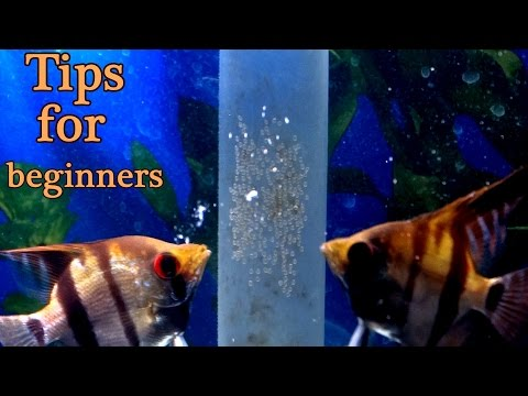 How to prevent your fish from eating their eggs. For beginners.