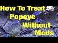 Best Proven Method For Treating Popeye | How I Treated Popeye Without Chemicals Or Meds